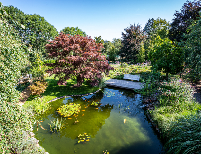 Vijver in parkachtige tuin in Maastricht - BTA Groen