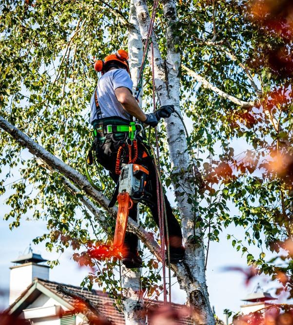 Het verzorgen en behouden van bomen is een vak apart. BTA Groen heeft gediplomeerde mensen in huis die deze werkzaamheden kunnen uitvoeren