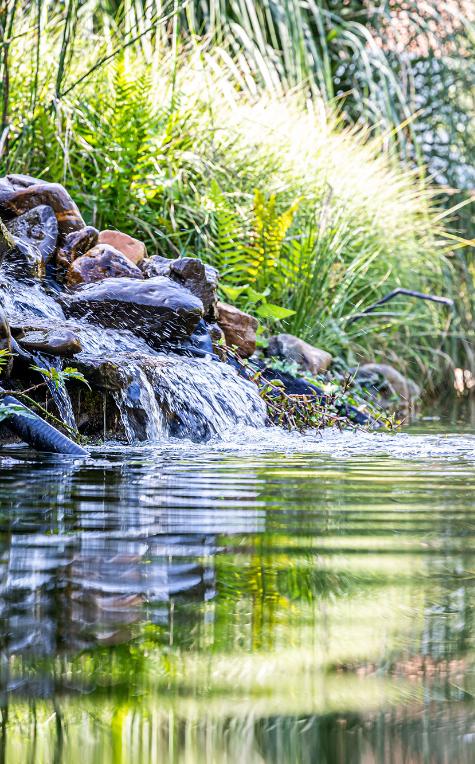 Water en vijver in een tuin, door BTA Groen