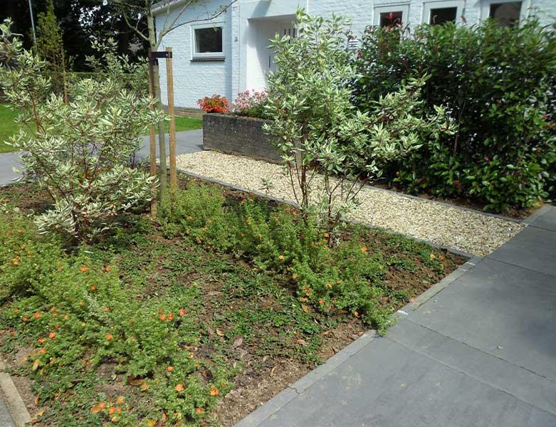 Beplanting in een moderne voortuin in Sittard Geleen