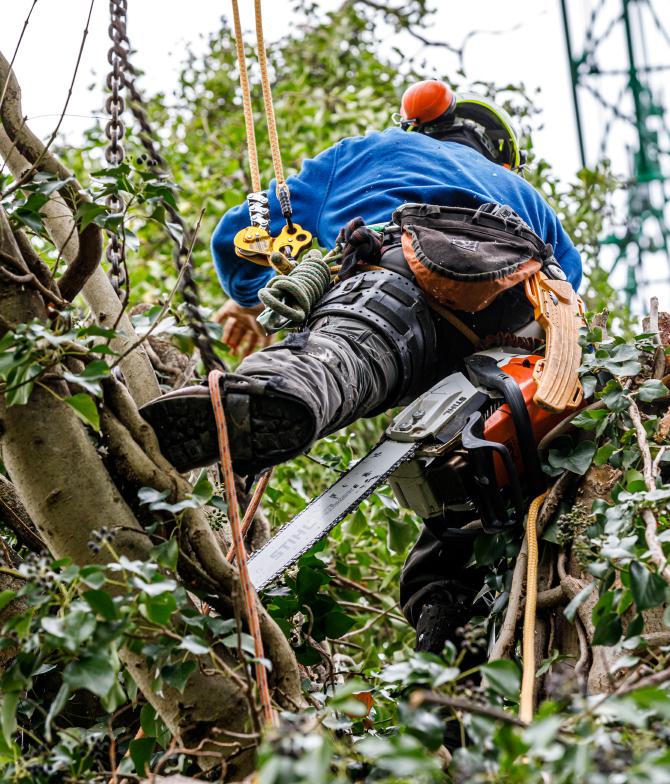 Snoeien van bomen moet gebeuren met veiligheidsmiddelen - BTA Groen