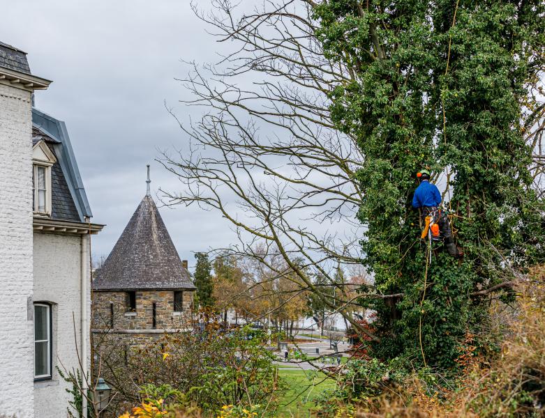 Specialistisch vellen bomen in Maastricht - BTA Groen