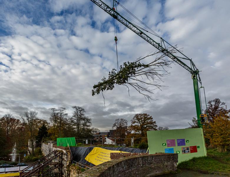 Boom wordt middels een kraan door de lucht verplaatst - BTA Groen